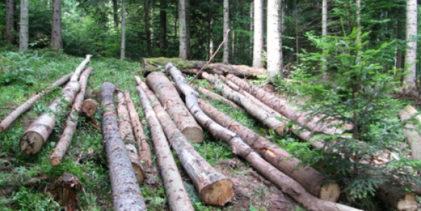 Osumnjičen za sječu i krađu drva na području Vrhovina