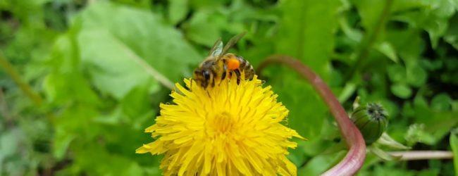 Redoviti tjedni sastanci Udruge pčelara Maslačak