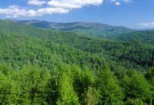 Prikupljanje ponuda za davanje u zakup šumskog zemljišta u vlasništvu RH