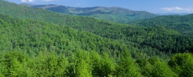 Danas je Svjetski dan šuma