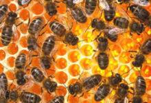 Pčelarima isplaćeno 17,2 milijuna kuna