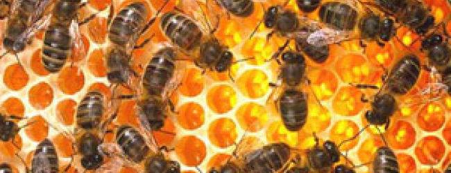 Stvaraju se uvjeti za povećanje konkurentnosti u pčelarskom sektoru