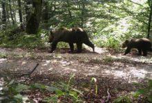 Predavanje o rezultatima istraživanja medvjeda na području NP Plitvička jezera