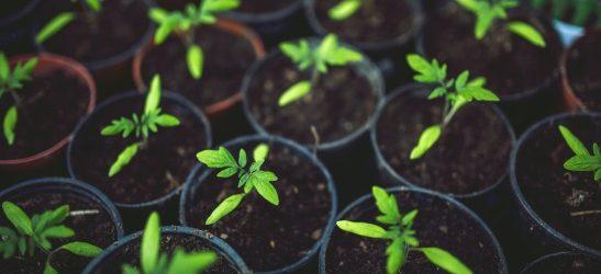 Dodatnih 46,6 milijuna kuna za osiguranje usjeva, životinja i biljaka