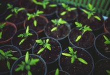 Vrtni centri, rasadnici te prodavaonice rezervnih dijelova za poljoprivrednu mehanizaciju i opremu počinju s radom
