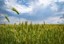 Isplaćeno gotovo 13 milijuna kuna potpore poljoprivrednicima