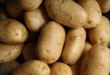 Ulaganje u skladišne kapacitete za krumpir – izmjena natječaja