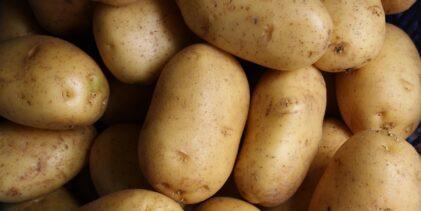Produženi rokovi za zahtjeve za potporu ulaganja u skladišne kapacitete za krumpir
