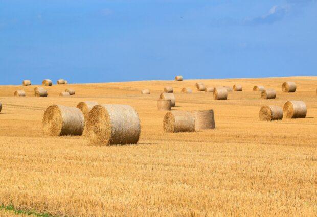 Nova potpora za poljoprivrednike: Poticanje uporabe stajskog gnoja na oraničnim površinama