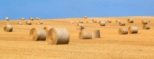 Isplaćene razlike potpore primarnim poljoprivrednim proizvođačima