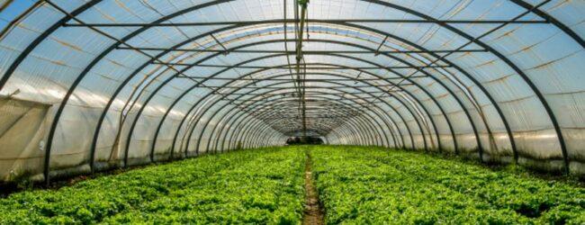 Uskoro potpore za ulaganja u proizvodnju povrća u plastenicima