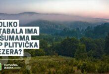 Nagradni natječaj: Koliko stabala ima u šumama Nacionalnog parka Plitvička jezera?